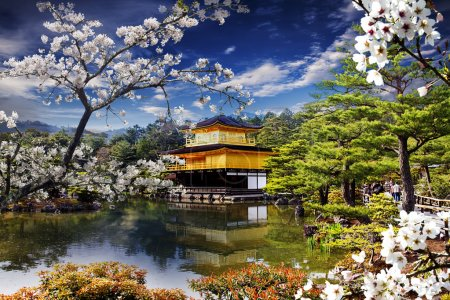 Beautiful sakura with gold color temple