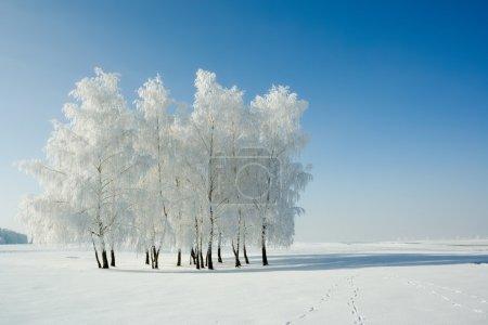 冬季景观和树木
