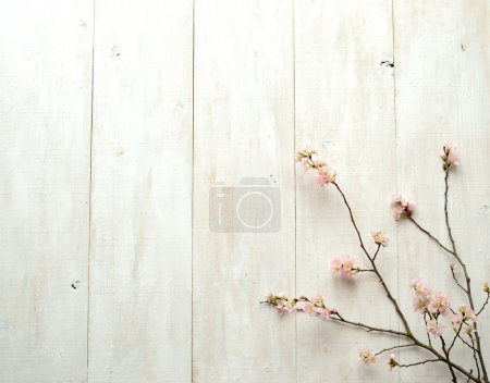Pink cherry blossoms on white wooden background
