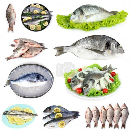 Fresh fish and fish dishes isolated on white