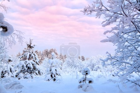 Winter landscape of snow-covered trees