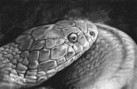 蛇纹身素描用铅笔所作的插图