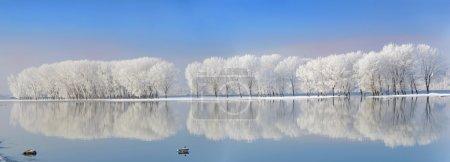 冬季树木覆盖着霜