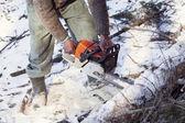 没有必要的保护人削减用链锯树