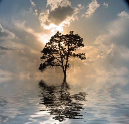 一棵树上水、 日落