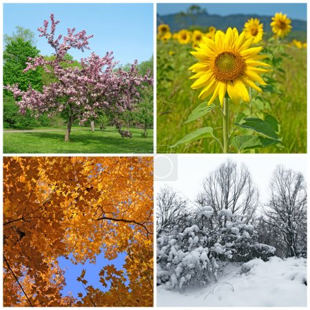 Spring, summer, autumn, winter. Four seasons.
