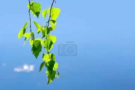 春天。绿色的叶子和天空_高清图片_邑石网